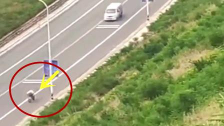 """""""神车""""被一辆自行车超车,5秒后精彩精彩发生!"""