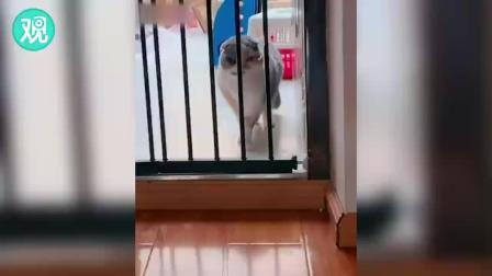 猫咪:哼,谁说我胖了