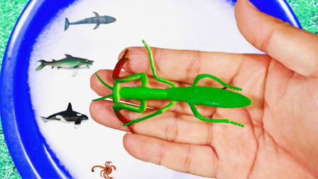 泡泡池里的动物 认识龙虾锤头鲨等海洋动物