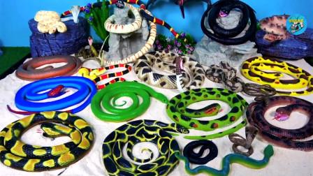 软体爬行动物玩具,多种大花蛇展示和介绍名称,制作假山蛇洞,儿童玩具,亲子互动