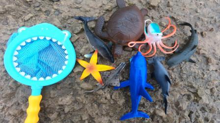 去海边认识锯鳐,虎鲨等八种海洋动物,小贝识动物