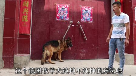 要想买到一只纯种德国牧羊犬,不能只看外表,最重要看这一点!