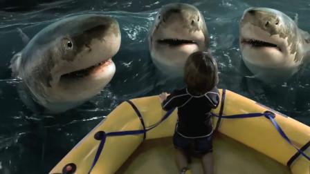 7岁男孩给鲨鱼喂食,却被困海里,没想到鲨鱼救了他!