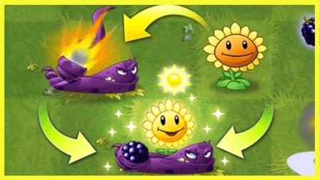 当黑莓藤曼和太阳花组合在一起后效果如何?僵尸:这谁顶得住啊