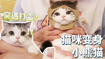 【泡芙】铲屎官去了一趟成都爱上熊猫,爱而不得竟让猫咪扮演小熊猫~