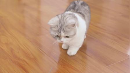 猫咪第一次见到老鼠吓到翻车,主人在一旁笑了起来