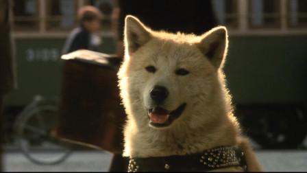 一部值得一看的温情催泪电影,豆瓣9.1分,《忠犬八公物语》