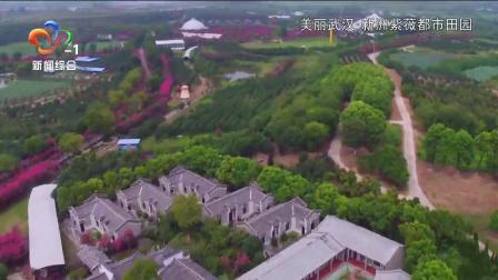 美丽武汉:新洲紫薇都市田园