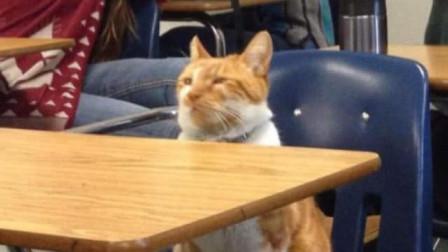 【每日一囧合辑】上课认真猫VS上课不认真猫,要开学了学着点