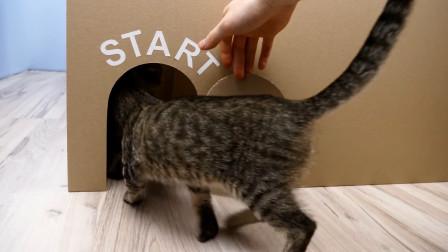 猫咪挑战巨大迷宫主人花3天时间用60张纸板制作它们能出来吗