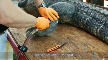 光鲜亮丽的背后有多残忍,看取鳄鱼皮过程后,你还想买奢侈品吗
