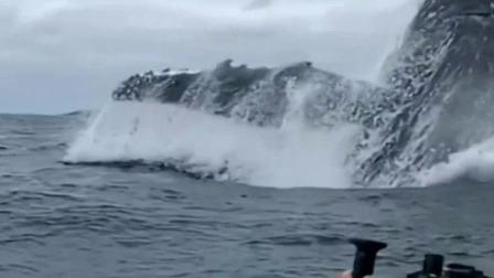 座头鲸跃身出海 场面令人震撼 每日新闻报 20190902 高清版