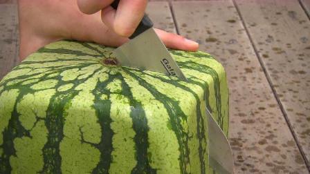 日本的方形西瓜凭啥卖到天价?老外一刀切开,瞬间傻眼了