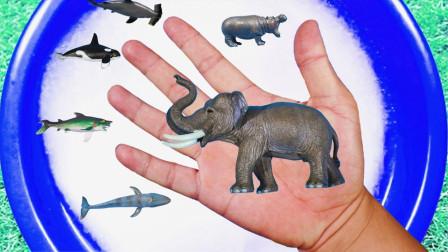 认识老虎河马大象等野生动物 海洋动物们一起玩泡泡