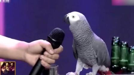 7岁鹦鹉智商与同龄孩子相似,流畅的自我介绍,引起现场观众尖叫