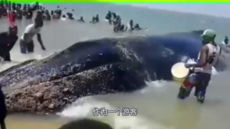鲸鱼在海滩搁浅,游人们上演暖心一幕