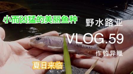 野水路亚VLOG.59 异鱲大丰收 在溪流体验夏天的感觉