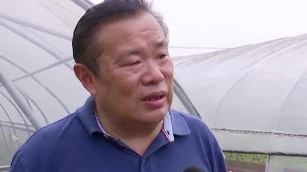 超级新闻场 2019 贵州:茅台酒糟种出有机蔬菜 废料变肥料