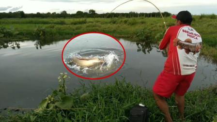 小哥野外钓鱼,一次抛两杆,一会儿大鱼疯狂咬钩,看看是啥鱼?