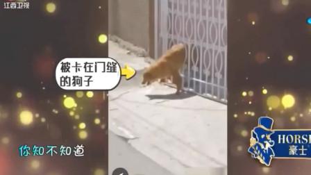家庭幽默录像:当卫星地图被无限放大时:狗子,你脸都丢到太外空了