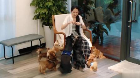 郭碧婷养了70多只宠物!向佐表示过敏原太多会影响怀孕