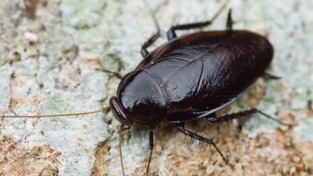 十二星座最害怕什么动物?双子座:不要让我看到蟑螂