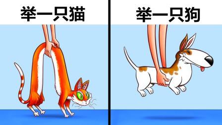 6个猫和狗的不同!你知道么?