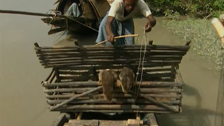 """傳說中的""""水猴子"""",被漁民訓練后用來捕魚?鏡頭拍下精彩全過程"""