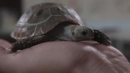 女儿生日,爸爸准备了她一直想要的乌龟,却吓坏了她,怎么回事?