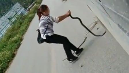客车司机和售票员路遇眼镜蛇竟抓上车 车上乘客被吓坏