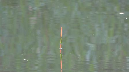 野钓:小河沟走水,跑铅钓法怎么样?看漂相顶得老高了!