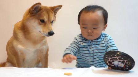 主人把最后一块饼干放在狗狗和宝宝面前 直接笑喷了!