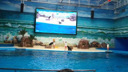 赣州极地海洋世界现场海狮表演