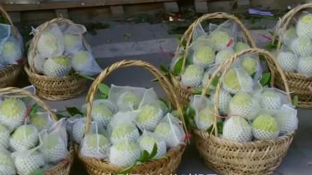 舌尖上的美食:岭南佳果林檎!一斤最高卖到50元以上,卖上一年岂不发财了?
