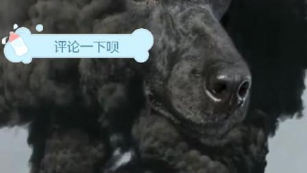 来喽来喽、他们真的来喽。OK雷迪森街特们博伊斯散勒狗。今天晚上为你送上一首流行的中文DJ舞曲