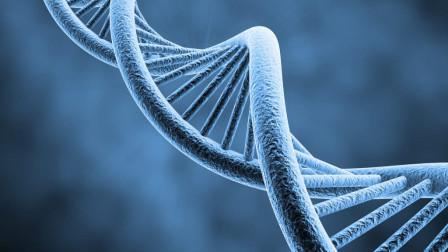 """不为人知的人体奥秘,人类98%的基因都是""""垃圾"""",却至关重要"""