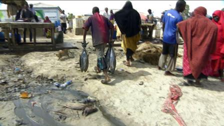 索马里,金枪鱼胖的不像话,为什么没有一个日本人敢捕捞?