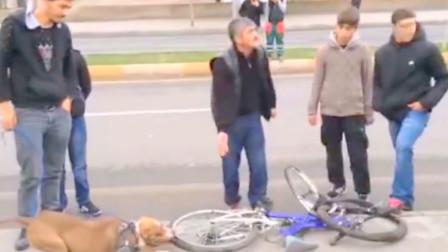 狗狗紧咬自行车胎不肯松口,大爷割开轮胎后,真相令人不淡定了