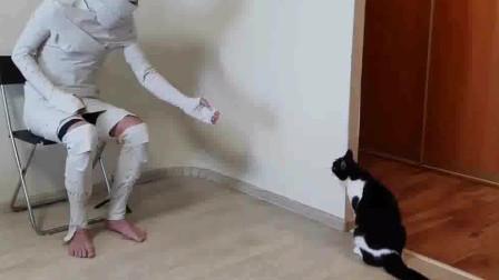 男主人装扮成木乃伊,测试猫咪的反应,猫:这是什么鬼