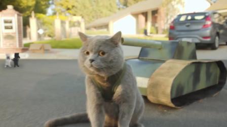 四川方言搞笑动物配音:猫咪讲四川话,还要玩和平精英!笑安逸了