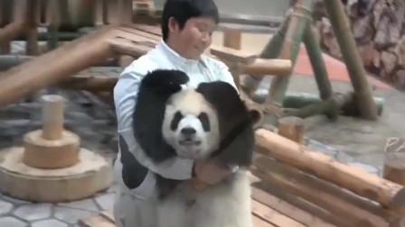 大熊猫:大家都是黑白配色,胖子何苦为难胖子