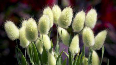 秋天院子种点草,颜值高还好养,这几种今年最流行!