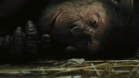 猩球崛起:凯撒被监禁,画出家里窗口图案,可再也看不见外面了