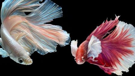 世界上最漂亮的鱼,美到让人惊叹,其中一种以丑字命名
