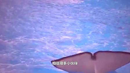 表演不给奖励惹怒鲸鱼,万名观众遭殃了?镜头记录全过程