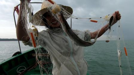 台风来临前去收网,大鱼往网里蹿还有大海星,可以去市场卖钱了