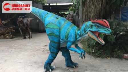 吐水双冠龙演出服-吐水恐龙道具