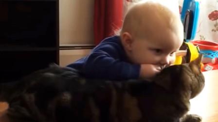 熊孩子咬了一下猫耳朵,猫咪准备反击,接下来的画面,太逗了