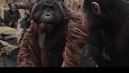 猩球崛起:管理员小看了猩猩,竟不知自己按下密码时被猩猩记下