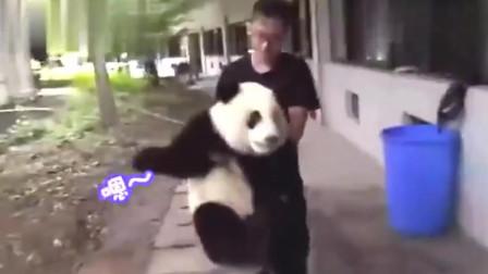 大熊猫生气饲养员嫌弃它胖, 和饲养员吵了一路